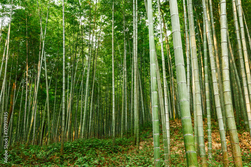 In de dag Bamboo Green bamboo forest in the summer