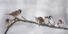 Sparrow On Branch In Winter Panorama