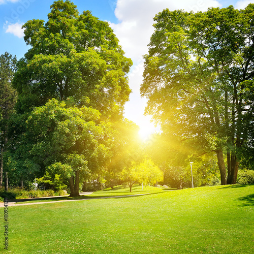 Garden Poster Forest summer park with beautiful green lawns