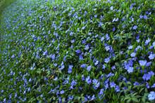 Periwinkle Floral Pattern