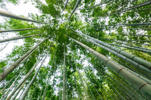 Poster Bamboe Green bamboo forest in the summer