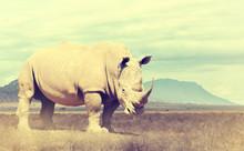 Wild African Rhino. Vintage Effect
