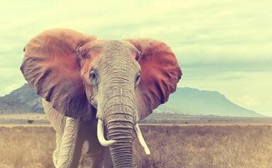 Panel Szklany Podświetlane Zwierzęta Wild african elephant. Vintage effect