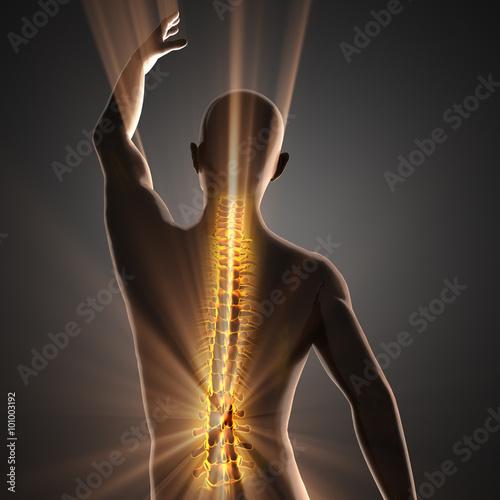 Fotografia  human bones radiography scan image
