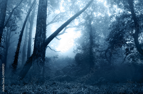Poster Bleu nuit Fog in the forest