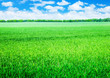Leinwanddruck Bild - field on a background of the blue sky