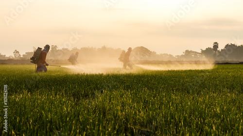 Fotografía  Rice farmers spraying.