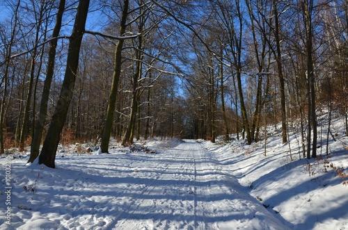 Deurstickers Berkbosje Wanderung durch den Winterwald