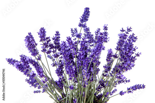 Foto op Aluminium Lavendel Closeup of lavender flowers over white background