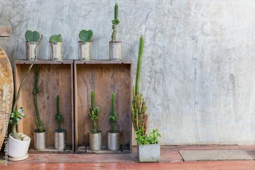 Fotografie, Obraz  Decorated plants