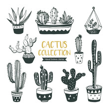 Hand Drawn Cacti And Succulents Collection