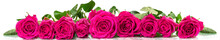 Panoramic Image Of A Bouquet Of Roses With Dew Drops