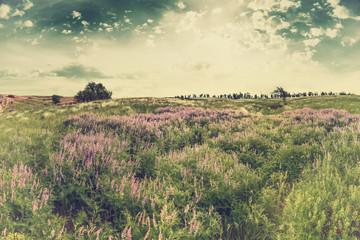 FototapetaVintage summer landscape