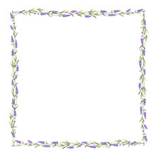 The Lavender Frame Line.