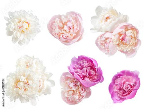 Fotomural Set of peonies flower
