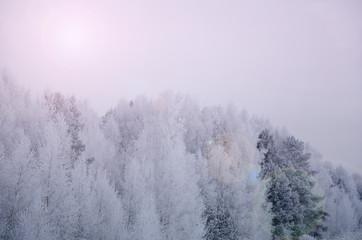 Fototapetaзимний сказочный лес с искрящимся солнечным бликом в нежных тонах розовый кварца и голубая безмятежность.