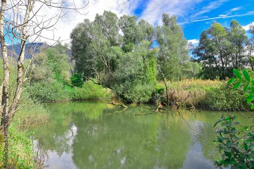 Fotografia, Obraz  Un lago nella palude