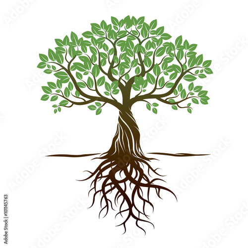 Color Tree and Roots. Vector Illustration. Canvas-taulu