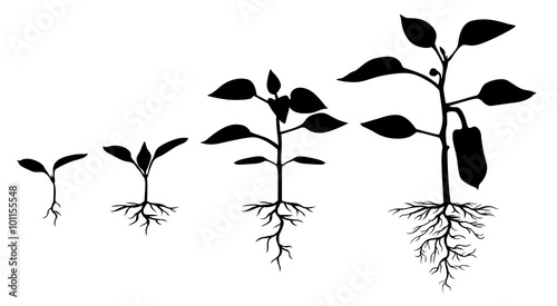 Fotografia  Set of silhouettes of peppers plants