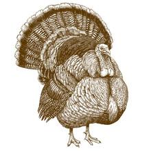 Engraving Illustration Of Turkey