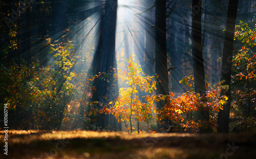 Canvas Prints Trees Autumn sunrise in the forest