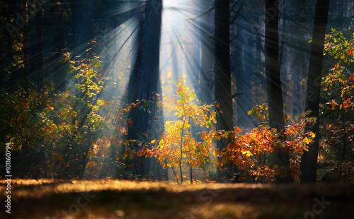Foto op Plexiglas Bomen Autumn sunrise in the forest