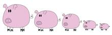 5 Pigs Family