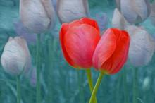 Tulips : Photographic Art Oil ...