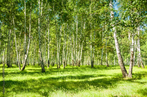 Photo  Summer forest with green trees at sunny day