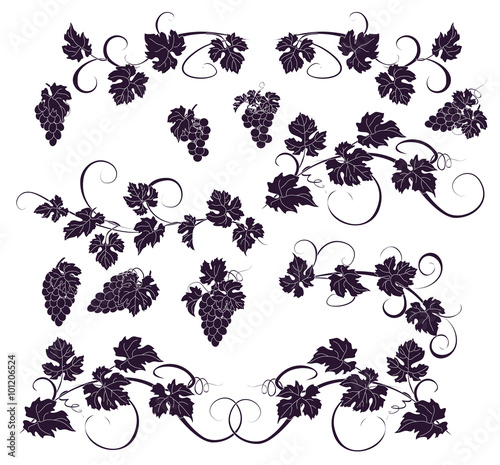 Vector design elements in vintage style with vines. Fototapete