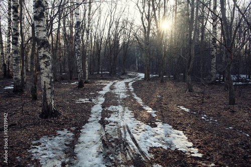 Spoed Foto op Canvas Grijze traf. early spring landscape of the snow in the forest