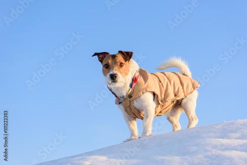 Fotobehang Honden Dog hiking at winter mountains