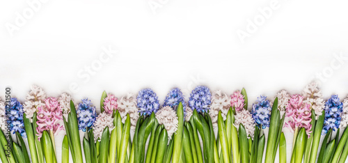 Foto-Tapete - Spring flowers panorama with fresh colorful Hyacinths on white wooden background, top view. Floral border. Banner for website. (von VICUSCHKA)