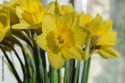 Recess Fitting Narcissus April blooming Narcissi flowers arranged in vase for interior de