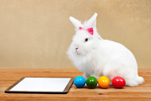 Easter Bunny Waiting For Online Orders