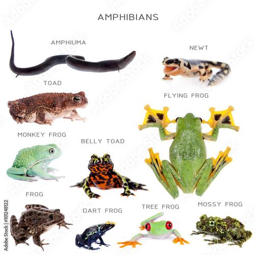 Amphibian education set on white Wall mural