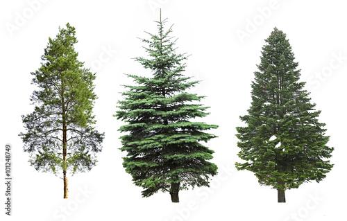 Fotografie, Obraz  Fir-trees, isolated on white