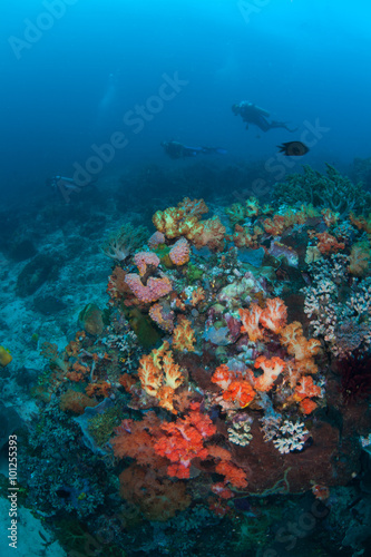Canvas Prints Coral reefs Colorful Reef and Scuba Divers