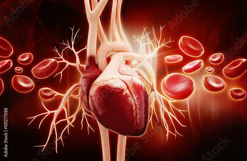 anatomia-ludzkiego-serca-i-komorek-krwi