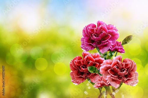 Photo  branch of beautiful flowers carnation
