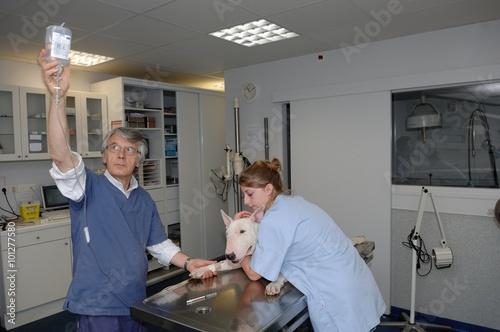 Leinwand Poster  La prise de sang et l'analyse sanguine permettent d'étudier les composants du sang