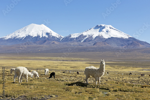 fototapeta na szkło The snowcapped volcanoes Parinacota and Pomerane. Bolivia