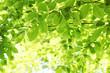 Leinwandbild Motiv Blätter im Sonnenschein