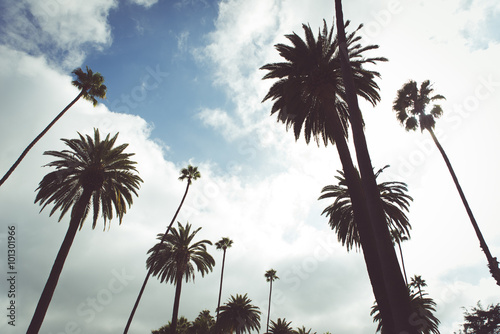 Poster Los Angeles Beverly hills palms