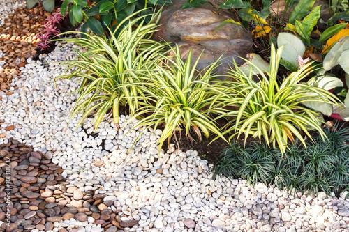 Landscaping combinations of plant and grass acheter cette photo libre de droit et d couvrir - Plant de rhubarbe a vendre ...