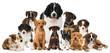 Verschiedene Hundewelpen