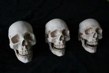 Tres Cráneos En Línea