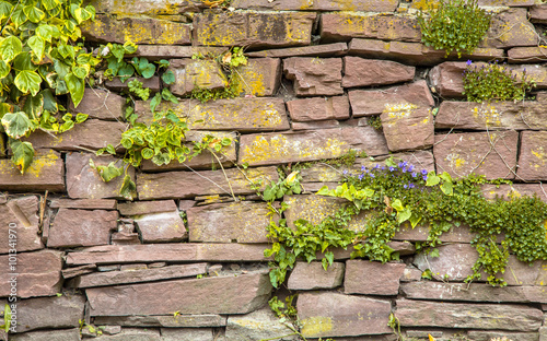 Old Cobblestone Wall Vegetation Background