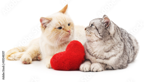 Photo  Two cats and red heart.