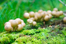 Puffball Mushroom In The Forest